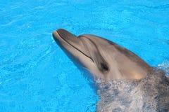Delfinbild - materielfotobilder Royaltyfri Foto