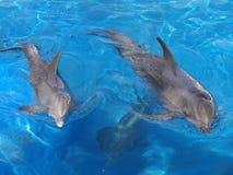 delfinen turnerar Arkivbilder