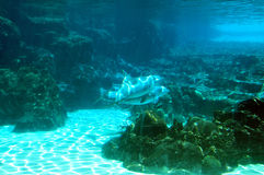 delfiner Arkivfoton