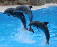 delfiner hoppar ut Arkivfoto