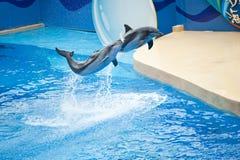 delfiner play två Arkivfoton