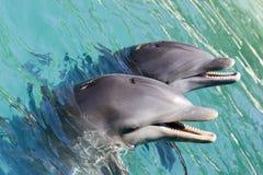 delfiner som leker två Arkivbilder
