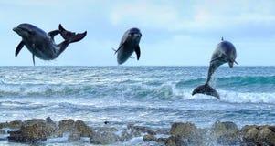 delfiner tre Royaltyfri Fotografi
