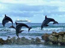 delfiner tre Fotografering för Bildbyråer