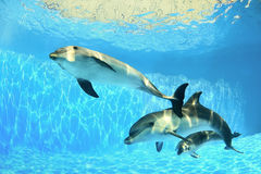 delfiner under vatten Royaltyfria Foton