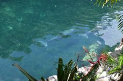 Delfines lizenzfreie stockfotos