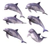 delfines Foto de archivo libre de regalías