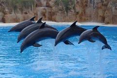 delfines Fotografía de archivo libre de regalías