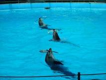 delfines Foto de archivo