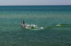 delfines Imagen de archivo