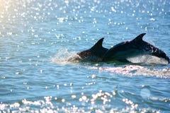 delfines Fotos de archivo libres de regalías