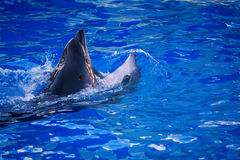 delfines Imagenes de archivo
