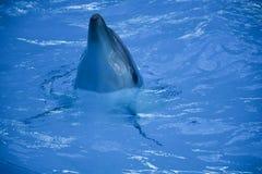 Delfinfisken bor havsnaturen royaltyfri foto