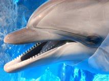 Delfinhuvudbild - materielfoto Royaltyfri Foto
