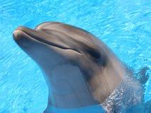 Delfinhuvudbild - materielfoto Arkivfoton