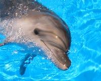 Delfinhuvudet föreställer - lagerföra fotoet Arkivbilder