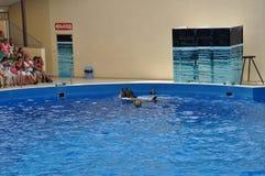 delfini Immagini Stock