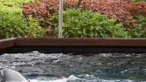 Delfini che attaccano la loro testa e che nuotano a Seaworld 2 archivi video