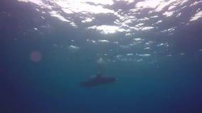 Delfini che nuotano in rosso mare, Eilat Israele m. M. stock footage