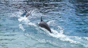 Delfini & cuore Immagini Stock Libere da Diritti
