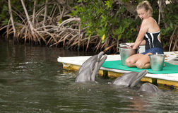 Delfini d'alimentazione immagini stock libere da diritti