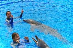 Delfini di Bottlenose con gli addestratori Fotografia Stock