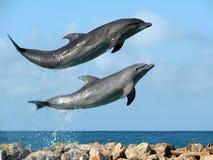 Delfini di risata Immagini Stock Libere da Diritti
