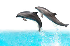 Delfini di salto Immagini Stock Libere da Diritti