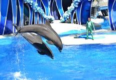 Delfini di salto immagini stock