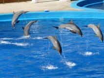 Delfini di salto fotografia stock