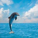 Delfini di salto uno Immagini Stock Libere da Diritti