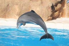 Delfini divertenti Immagini Stock