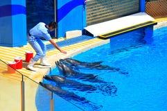 Delfini e l'addestratore Fotografia Stock Libera da Diritti