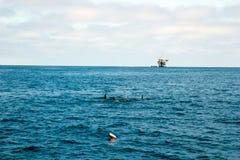 Delfini ed impianto offshore Fotografia Stock Libera da Diritti