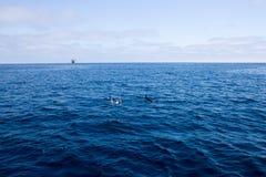 Delfini ed impianto offshore Immagine Stock Libera da Diritti