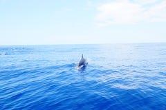 Delfini isolati nell'oceano divertendosi sotto il sole Immagini Stock Libere da Diritti