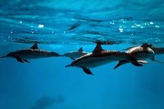 Delfini nel mare Fotografia Stock Libera da Diritti