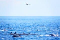 Delfini nell'oceano divertendosi sotto il sole Immagine Stock Libera da Diritti