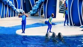 Delfini nella manifestazione variopinta di giorno del delfino; È una celebrazione festiva del nostro mondo naturale a Seaworld ne video d archivio