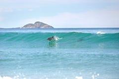 Delfini praticanti il surfing Fotografie Stock