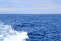 Delfini vicino alla costa di Ventura, California Fotografia Stock