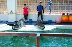 Delfinkapacitet Royaltyfri Fotografi