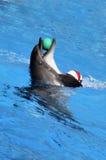 delfinlek Royaltyfri Foto