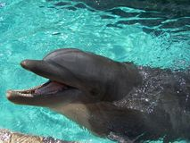 delfinmöte Arkivbilder