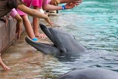 delfinmatning Royaltyfri Foto