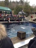 delfino Immagini Stock Libere da Diritti