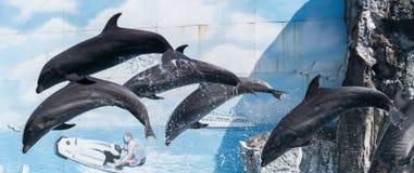 delfino Immagine Stock