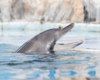 delfino Fotografie Stock Libere da Diritti