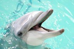 Delfino in acqua blu Fotografia Stock Libera da Diritti