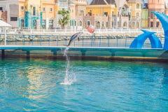 Delfino in acqua blu che gioca con la palla fotografie stock libere da diritti